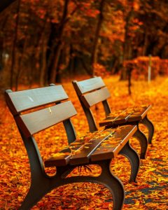Leafs on park benches